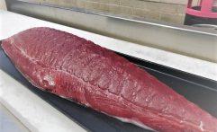 Local Bigeye Tuna